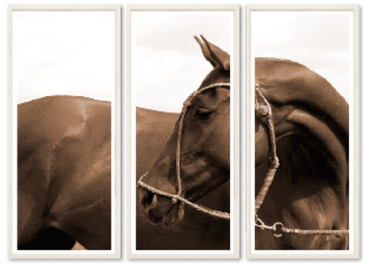 horse triptych