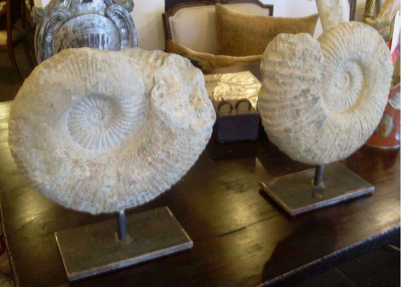 pair of ammonites