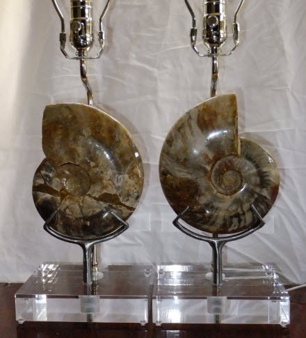 pair polished whole ammonite lamps